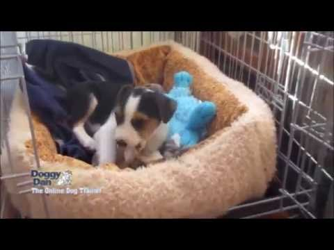 puppy-care,-how-much-to-feed-your-puppy,-crate-training,-to-puppy-socialisation