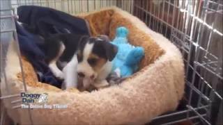 Puppy Care, How Much To Feed Your Puppy, Crate Training, To Puppy Socialisation