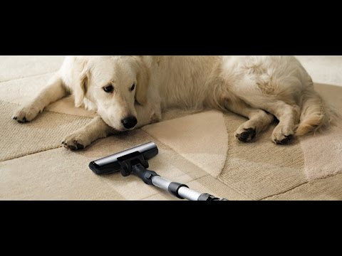 Funny Dogs vs Vacuum Cleaner Compilation 2016 5MC