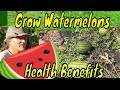 Watermelon Muscle sorness and lower blood pressure