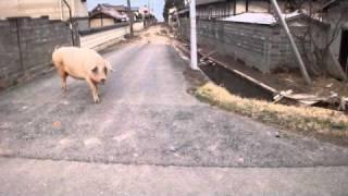 東北関東大震災被災地復興支援プロジェクト「長靴を届けます」Project ...