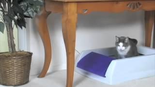 Scoop Free - автоматический туалет для кошек(, 2014-10-08T12:43:41.000Z)