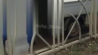 Отстрел бездомных собак в Ставрополе взбудоражил общественность