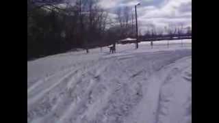 Quidam: Irish Wolfhound Vs Snowman Dscf3933