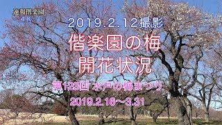 2019.2.12現在の偕楽園の梅開花速報です。散策のご参考にどうぞ。