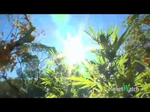 Race To Harvest Illegal Marijuana Cash Crop