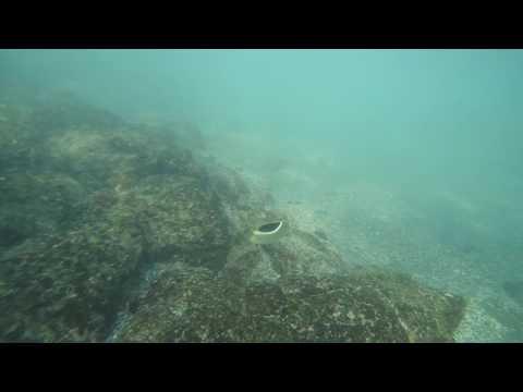 Snorkeling in Kona (Kahalu'u Beach Park)