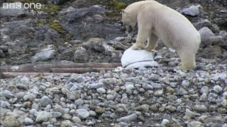 Polar_bears_smash_the_spy_cams_-_Polar_Bear:_Spy_On_The_Ice_-_BBC_One