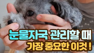 강아지 눈물자국 관리하…