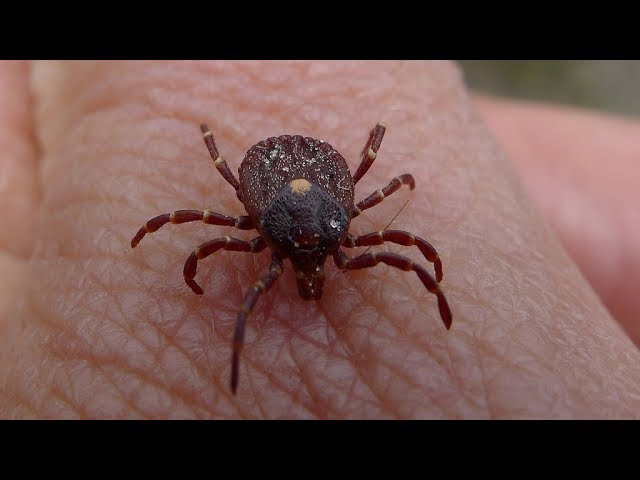 kansas-farmer-dies-after-being-bitten-by-a-tick-and-contracting-a-virus-doctors-have-never-seen