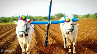Bulls video-indian bulls-top video-best videos-biggest bulls-గ్రామం బొమ్మనహల్  మండలం అనంతపురం జిల్లా