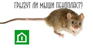 Грызут ли мыши пенопласт?(Компания «Дом за месяц» запускает цикл коротких видеороликов, которые должны развеять все возникшие сомне..., 2016-06-03T07:34:29.000Z)