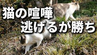 猫の喧嘩 ことわざ 逃げるが勝ち:戦わないで逃げたほうがかえって良いこ...