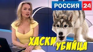 хаски снял скальп с ребёнка / новости россия 24