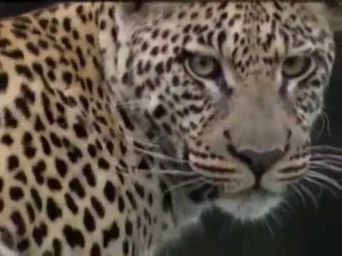 documentarios discovery channel animais selvagens