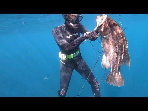 Dhufish Off The Rocks South WA