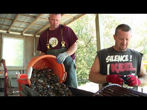 Shellfish Aquaculture In Florida