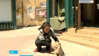 Вести-Хабаровск. Собак увозят в Китай