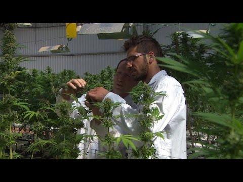 Is 'kosher' Cannabis Israel's Next Big Exp...