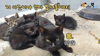 """밥 챙겨주는 집사에게 새끼들 소개한 길냥이..""""특별히 보여주는 고양!""""  #shorts"""