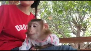 Monkey Baby Nui | Nui is free to climb trees