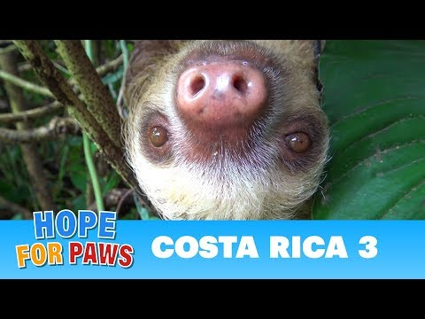 Hope For Paws in Costa Rica  rescues and super special animals! Please share.