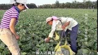 20140503 地理中国 寻奇天下——哈密探奇(上)