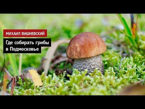 Михаил Вишневский: Где собирать грибы в Подмосковье
