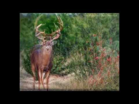 Holden Pasture Deer Lease- South Texas