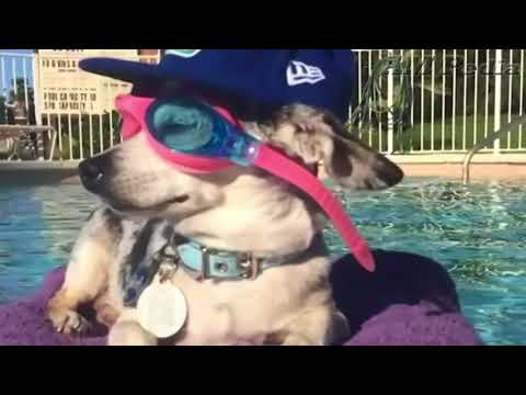 Cute Funny Dogs Swimming in Pool Compilation 🤗😙