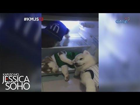 Kapuso Mo, Jessica Soho: Husky puppies, cool dogs!