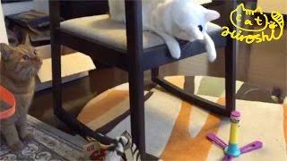 椅子の上からオモチャで遊ぶ妹タマに ひろしが「ちゃんと遊ぶにゃ」とふ...