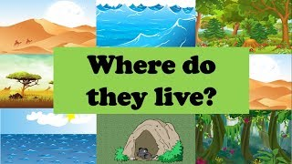 Где живут животные? Где ты живешь? Учимся говорить на английском