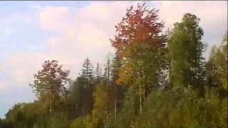 БЕРЕЗЫ - Николай Трубач на стихи  Дмитрия Дарина