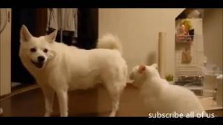 cat dog fight videos | funny videos | comedy video | cat dog fight