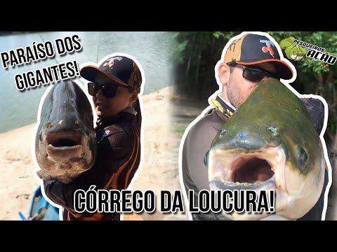 CÓRREGO DAS ANTAS, SÓ PANELA NA CEVADEIRA! - Pesqueiros Em Ação!