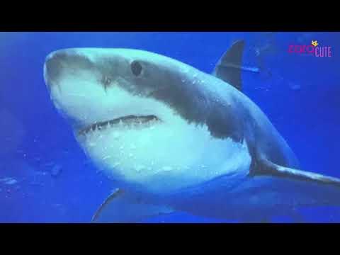 Zara News #26 | Under The Sea Bersama Lana | Yuk Isi Hari Libur Dengan Bahagia Dan Menambah Ilmu