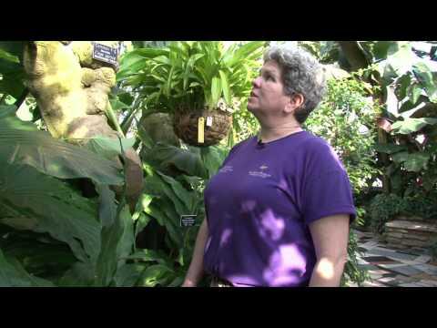 Marjorie McNeely Conservatory North Garden Quick Tour