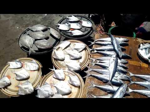 Harnai Murud Dapoli Fish Market