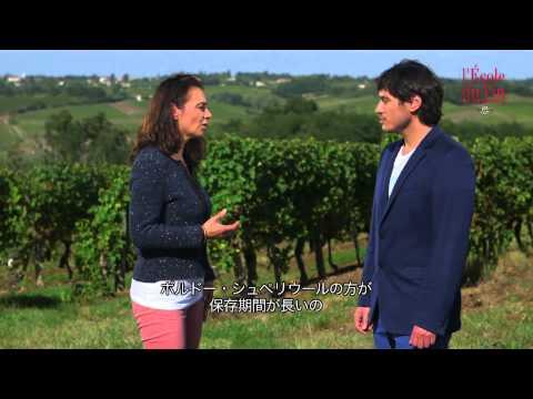 ボルドーワインとボルドー・シューペリウールの特徴 - The characteristics of Bordeaux wines
