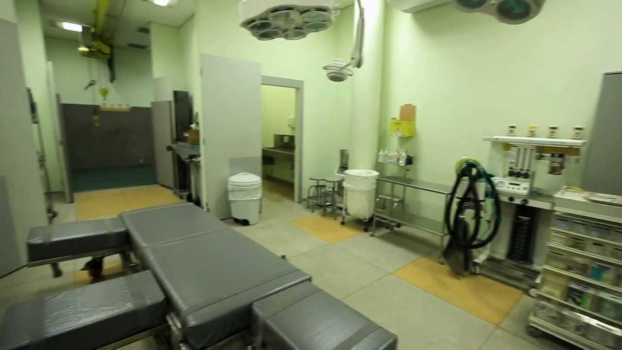 Hospital Veterinrio  Universidade Anhembi Morumbi  YouTube
