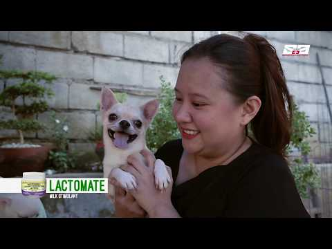 AGRITV JUNE 30, 2019 EP - HAPPY PETS Breed of the Month Chihuahua- Dr. Madeleine Elaine Lee