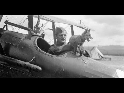 25 Animals You Wont Believe Went To War