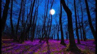 Good Night Music   Tranquil Deep Sleep Music   Calming Music For Sleeping   Peaceful Sweet Dreams
