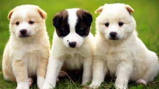 Фото Подбор, про собак под музыку.