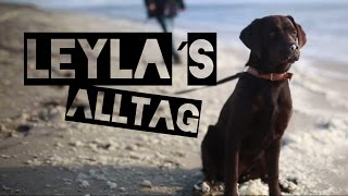 Labrador Leyla  Alltagsroutine // 6 Monate