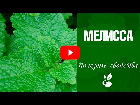 Лофант (трава): полезные свойства, польза и вред