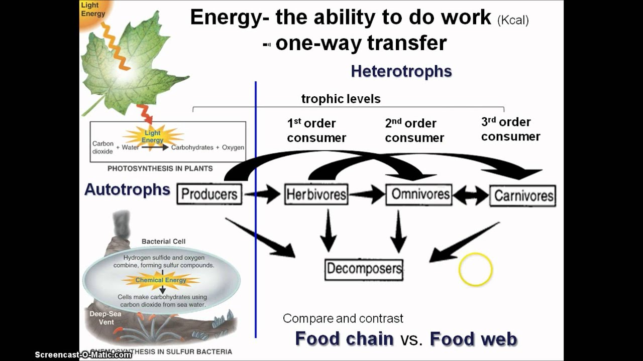 Ecology energy transfer in an ecosystem lessons tes teach ecosystems are powered by energy which flows from the sun life on earth is possible because photosynthesis captures the light energy from the sun and ccuart Image collections