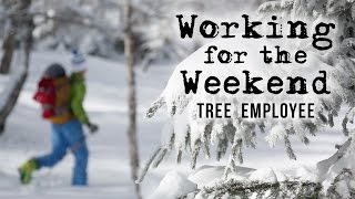 Working For The Weekend S2|E1 - Tree Employee