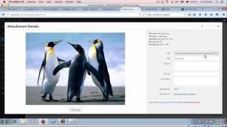 Quản lý video và hình ảnh trong Wordpress